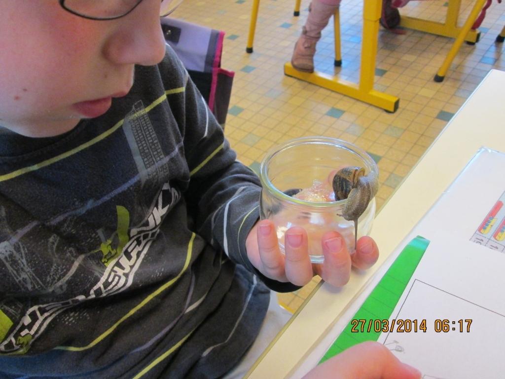 Escargots-Séance-1-photos-010