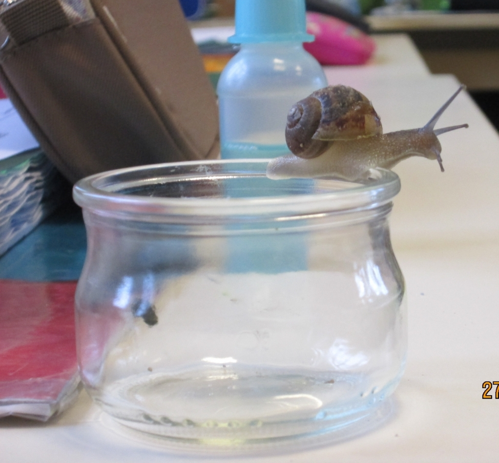Escargots-Séance-1-photos-012